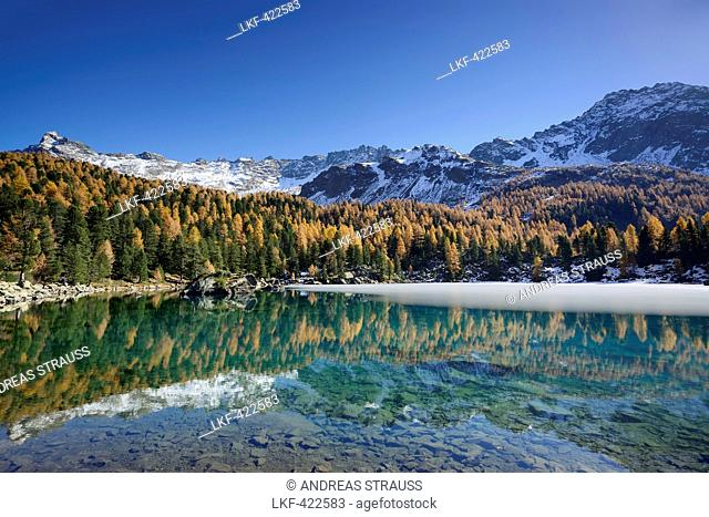 Larch trees in autumn colors and snow-capped mountains reflecting in a mountain lake, Lake Saoseo, Val da Cam, Val Poschiavo, Livigno Range, Grisons