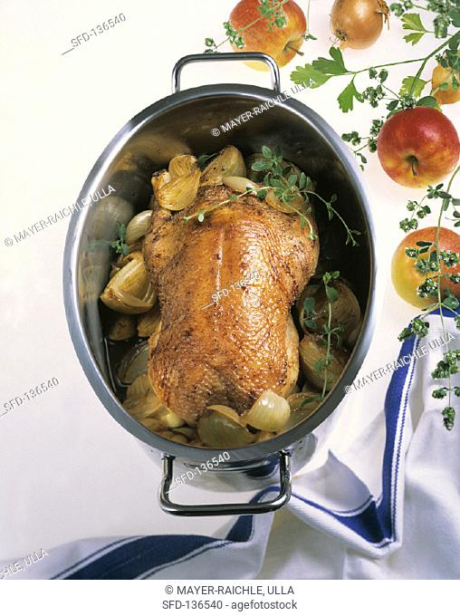 Roast goose with shallots & fresh marjoram in roasting dish