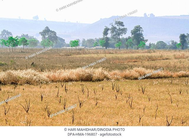 Fields, bastar, chhattisgarh, india, asia
