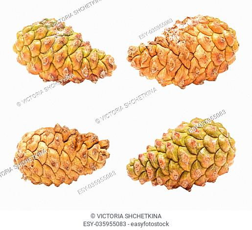Set unopened cones of pine tree isolated on white