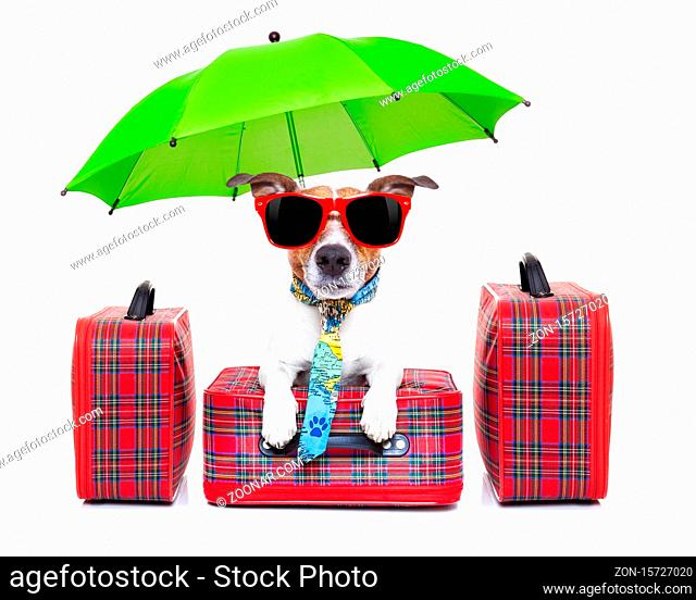 dog with luggage ready to go on summer holidays or vacation with umbrella and sunglasses