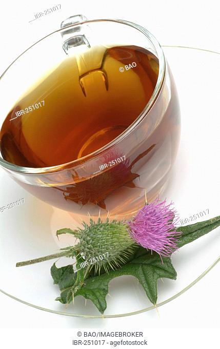 Cotton thistle, scotch thistle, medicinal tea, Onopordum acanthium, onopordon, Onopordo tomentoso