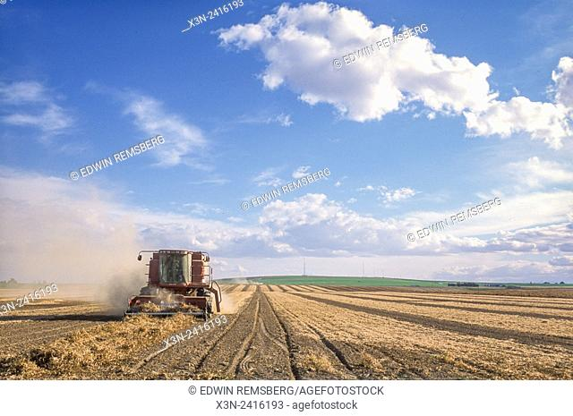 Idaho, USA - Bean Harvest
