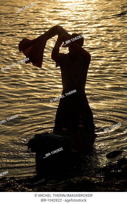 Indian man washing clothes in the Ganges, Varanasi, Benares, Uttar Pradesh, India, South Asia