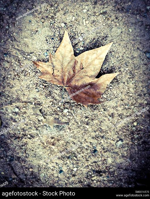 dried leaf on the ground on runnig trail in cordoba