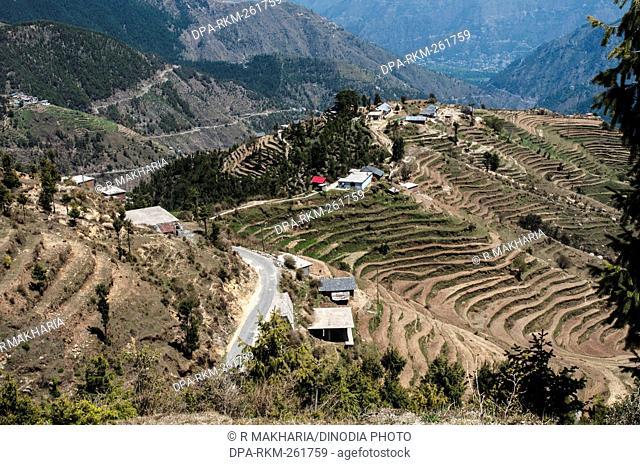 Terrace farming, Chamba, himachal pradesh, India, Asia