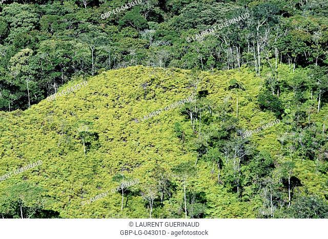 Landscape, Vale do Paty, Chapada Diamantina, Bahia, Brazil