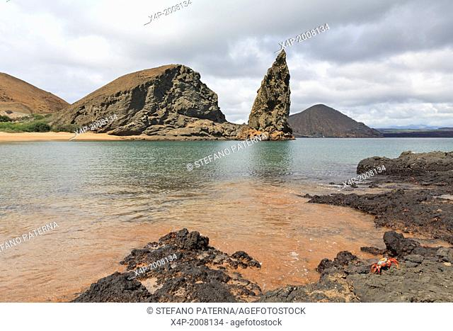 Sally Lightfoot Crab, Pinnacle Rock, Bartolome Island, Galapagos Islands, Ecuador
