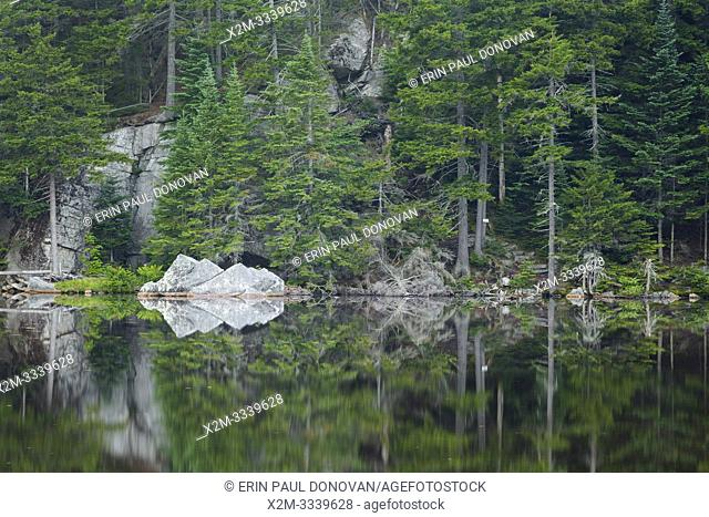 Reflection of forest in Saco Lake in the White Mountains of New Hampshire