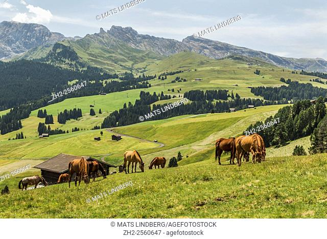 Horses walking on a grass plane, high mountains in the background, trees and forest, Dolomites, Selva, val Gardena, Italy
