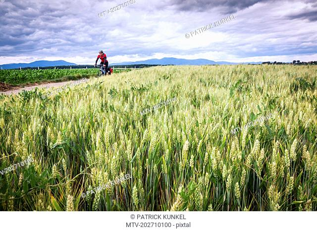 Man in sportswear riding bicycle on road amidst green field