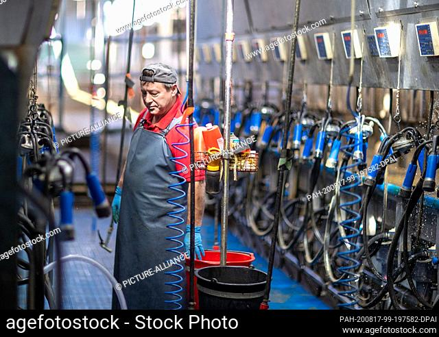 13 August 2020, Mecklenburg-Western Pomerania, Groß Grenz: Milker Ralf Rabbe is standing in the milking parlour of the GGAB farm