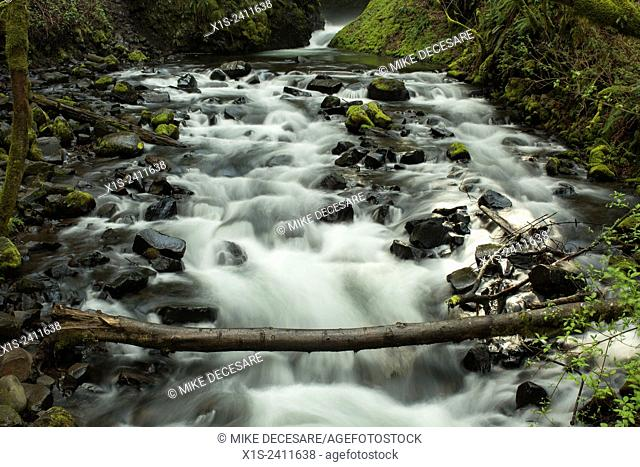 Fast moving river creates a series of rapids as it flows downstream below a fallen tree