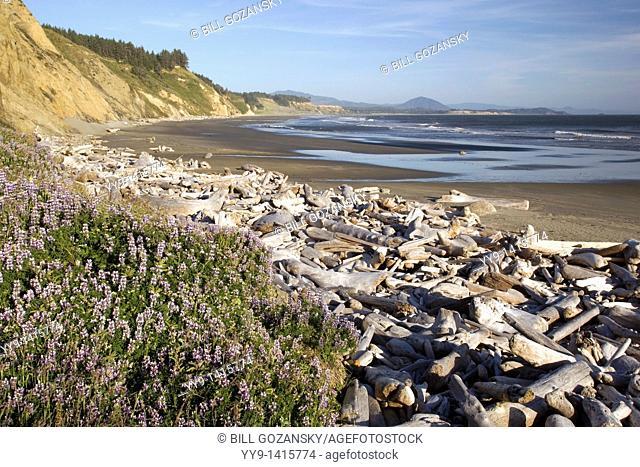 Driftwood on beach - Cape Blanco State Park - near Port Orford, Oregon