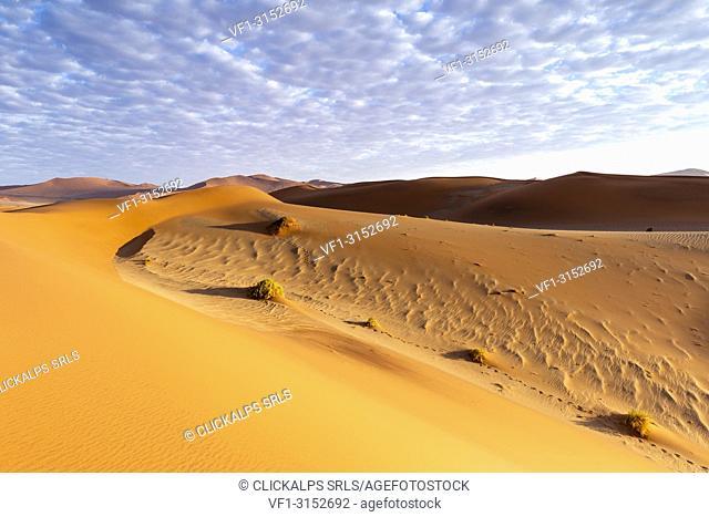 Morning view of Sossusvlei sand dunes, Namib Naukluft national park, Namibia, Africa