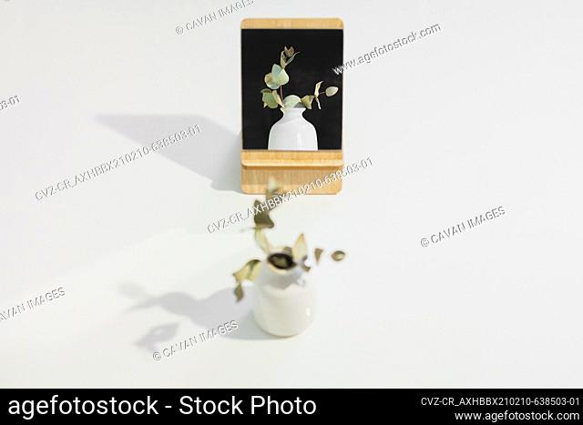 Dry plant in a vase reflected in the mirror in white studio back