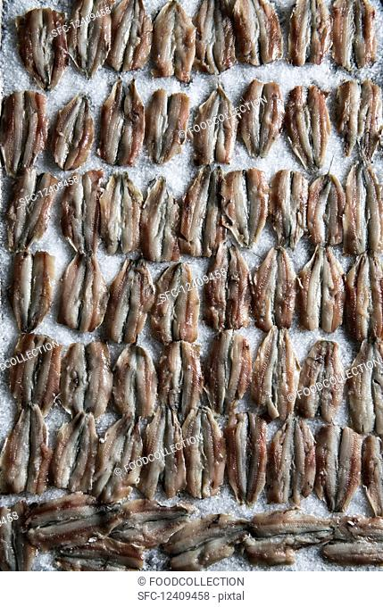 Rows of anchovies on a bed of salt