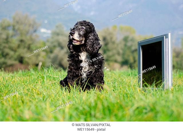 Dog sittig down on the field close to a television