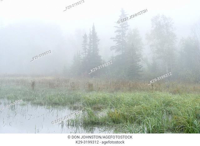 Beaver pond vegetation in morning fog, Greater Sudbury, Ontario, Canada