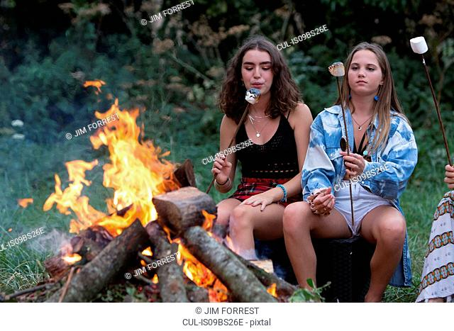Friends toasting marshmallows at bonfire party in park