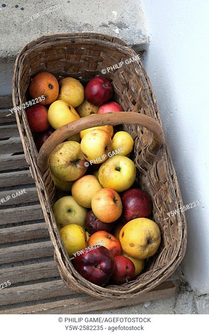Basket of home-grown apples of mixed varieties at Krems a. d. Donau, Austria