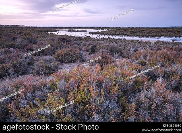 Halophilic plants, Estany Pudent, Formentera, Pitiusas Islands, Balearic Community, Spain