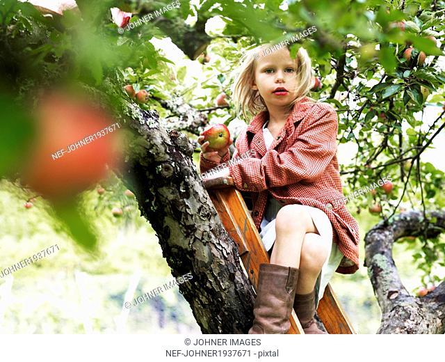 Girl on ladder eating apple, Varmdo, Uppland, Sweden