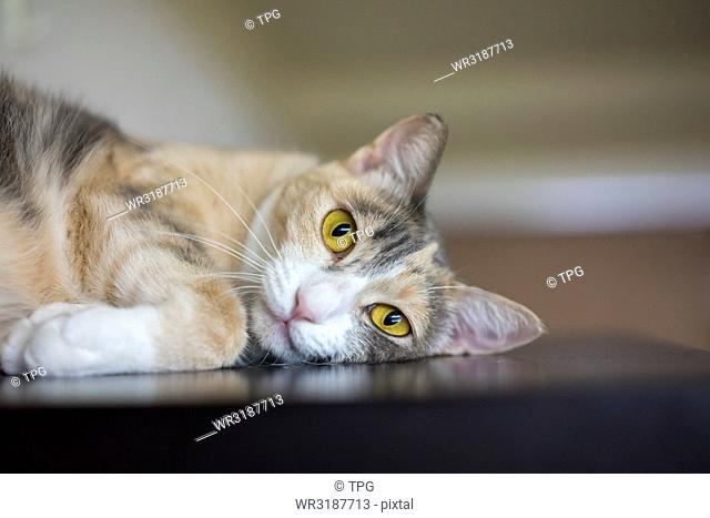 portrait of Cat look at the caream