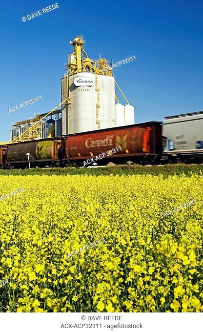 rail grian hopper cars pass a canola field and inland grain terminal near Portage la Prairie, Manitoba, Canada