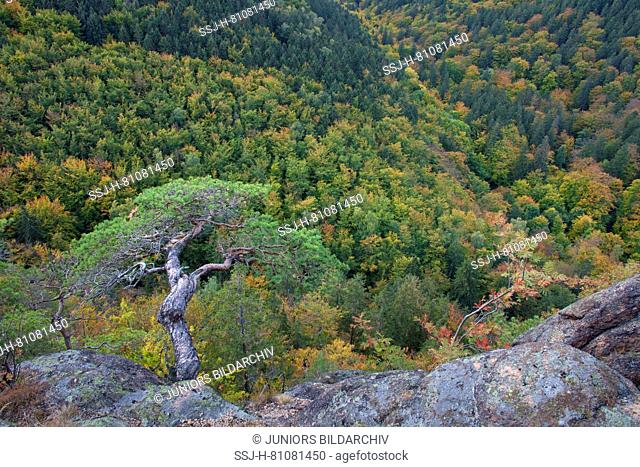 View from the Ilsestein into the Ilse Valley, Harz National Park, Saxony-Anhalt, Germany