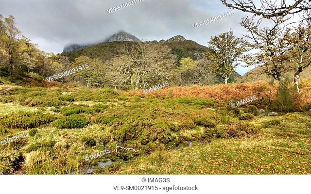 Cuesta Fría wood, Vegabaño, Cornión Massif, Picos de Europa National Park and Biosphere Reserve, León province, Spain