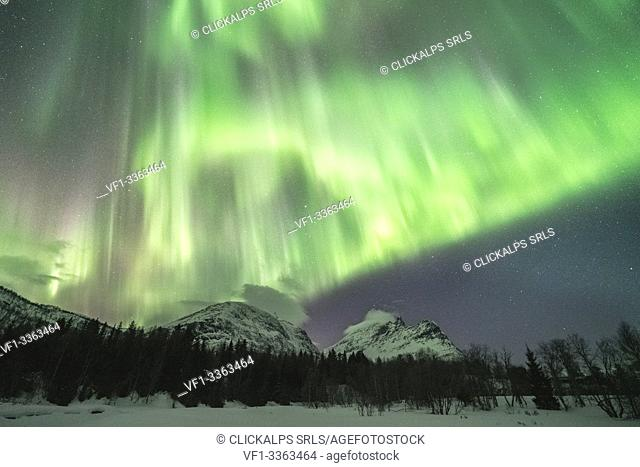 Northern lights in the sky above mountain peaks and trees. Skoddebergvatnet lake, Grovfjord, Troms county, Northern Norway, Norway