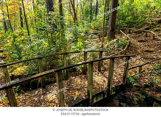 A trail over a small foot bridge through a forest in autumn