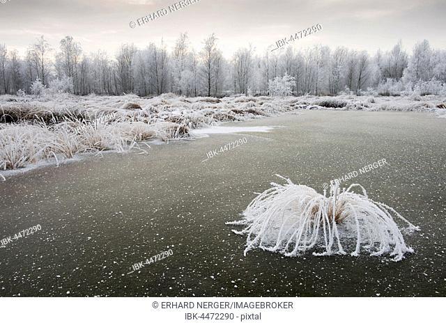 Moor landscape in winter with hoarfrost, Emsland, Lower Saxony, Germany