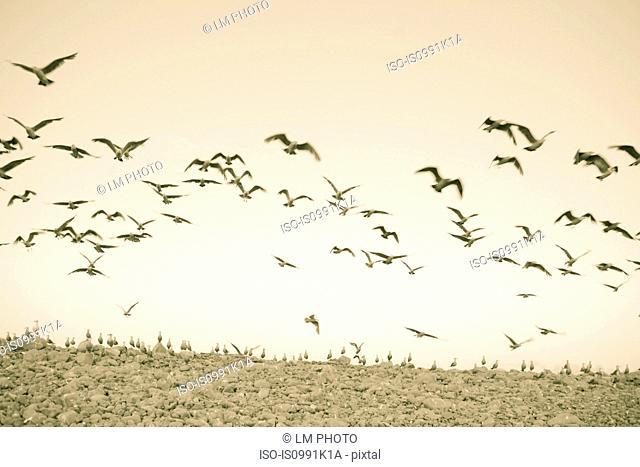 Birds flying over rocks