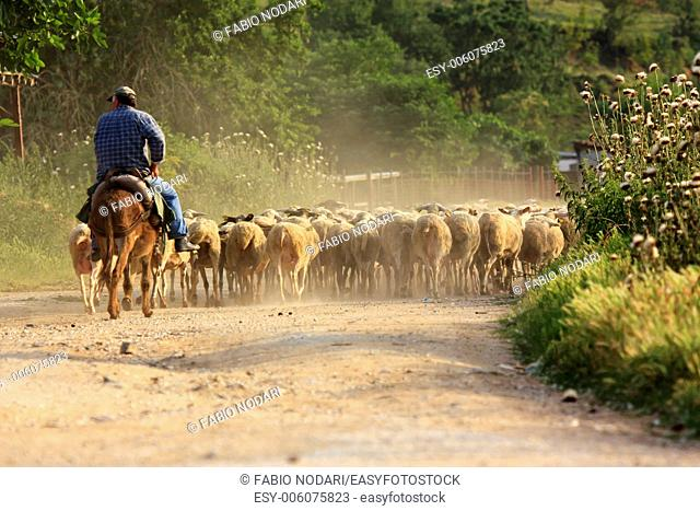Shepherd on a donkey
