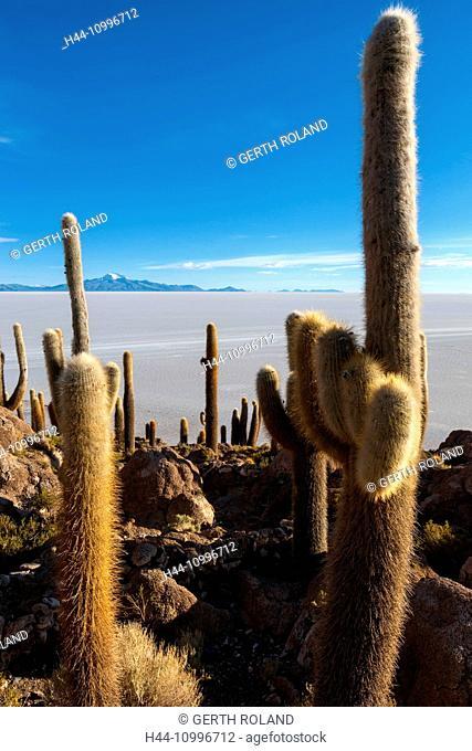 cacti, Bolivia, Altiplano