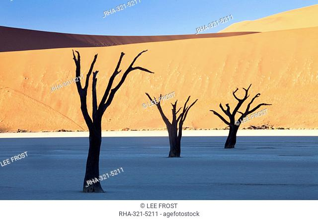 Dead camelthorn trees said to be centuries old in silhouette against towering orange sand dunes bathed in morning light at Dead Vlei, Namib Desert