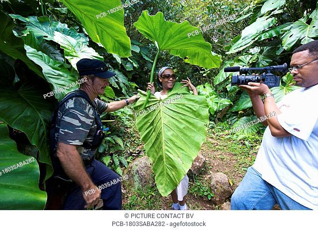 Saba, Mt Scenery, rainforest, tropical vegetation Park ranger James demonstrating elephant ears