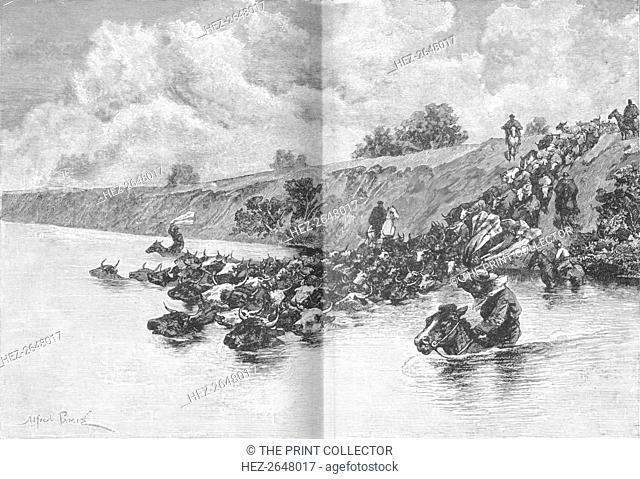 'Herd of Cattle Crossing the Uruguay', c1885, (1890). Artist: Robert Taylor Pritchett