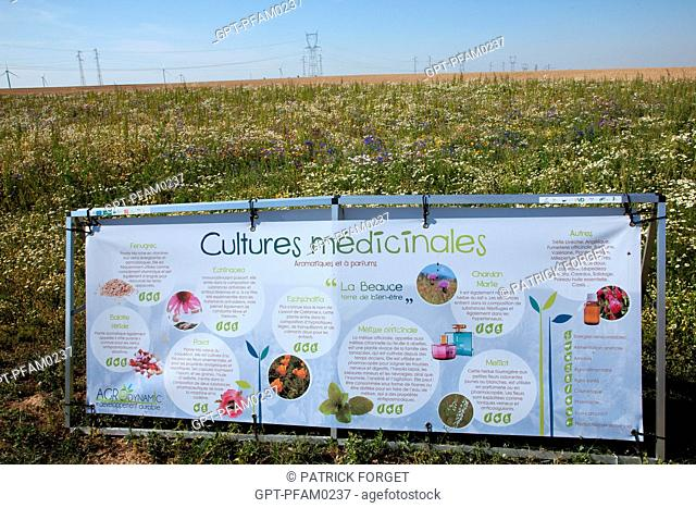 FLOWERING FALLOW LAND AND THE GROWING OF MEDICINAL PLANTS IN THE BEAUCE, FRANCE EURE-ET-LOIR 28, FRANCE