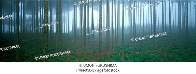 Forest in Fog, Shizuoka, Japan