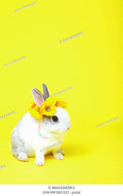 Rabbit sitting with flowers on head against colored background