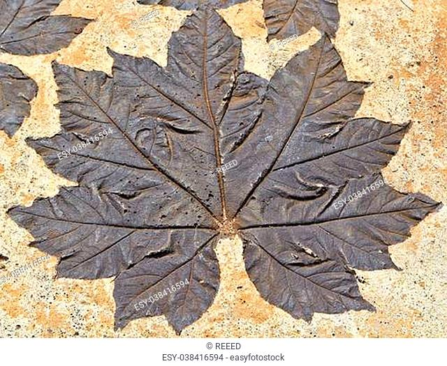 Leaves on mortar