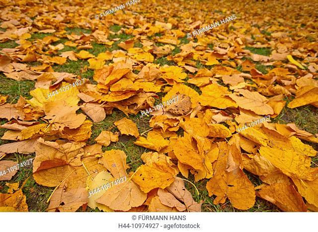 Nature, Europe, Germany, scenery, autumn, season, tree, trees, leaf, leaves, autumn wood, autumn, autumn, autumn colouring, foliage, autumn foliage