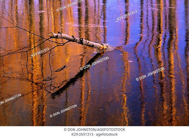 Ice patterns in beaver pond, Greater Sudbury, Ontario, Canada