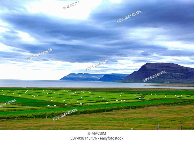 Icelandic Rural Landscape. Hay bales in white plastic on the meadow