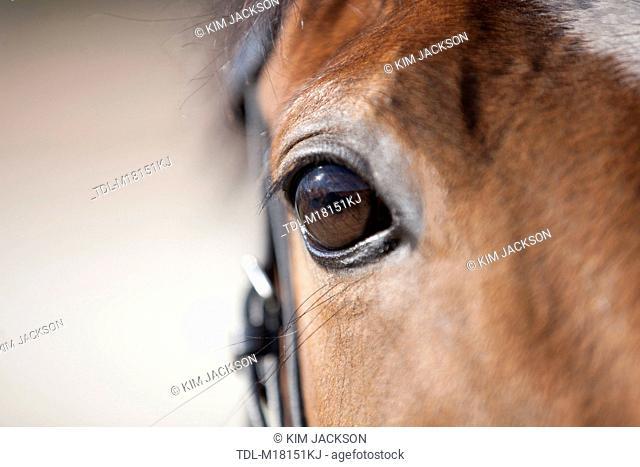 A horses eye, close up