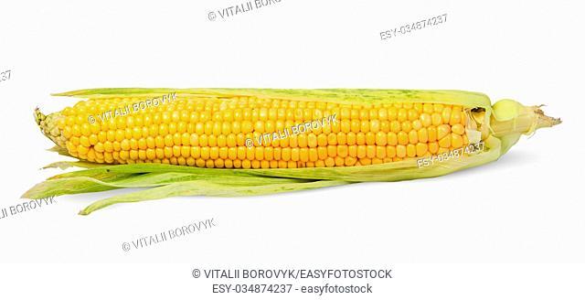 Single half peeled ear of corn isolated on white background