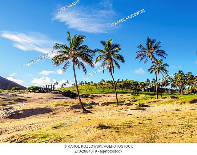 Palm Trees by the Anakena Beach, Easter Island, Chile